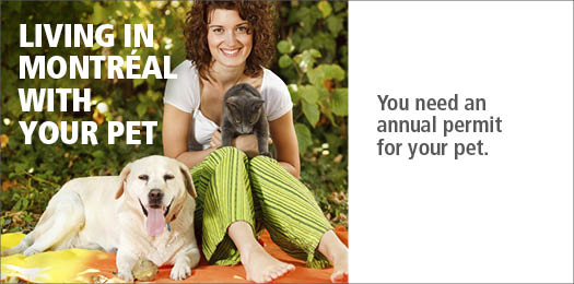 Living in Montr�al with your pet