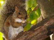 Trucs pour éloigner les écureuils