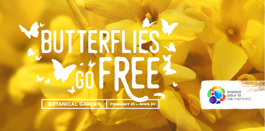 Butterflies go free, until April 30 - Jardin botanique