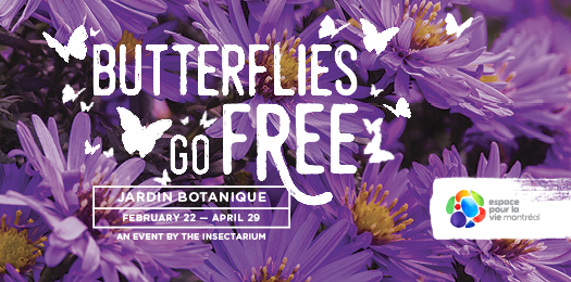 Butterflies go free! - Jardin botanique, February 22 to April 29