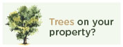 You have trees on your property?
