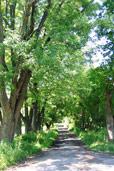 Ville de montr al conseil du patrimoine de montr al comment prot ger les arbres remarquables - Comment proteger les arbres fruitiers du gel ...
