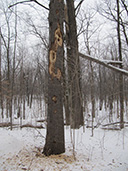 Arbre à faune hiver
