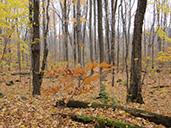 automne dÉbris saraguay
