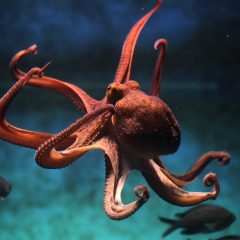 The first entirely soft robot is a small octopus!