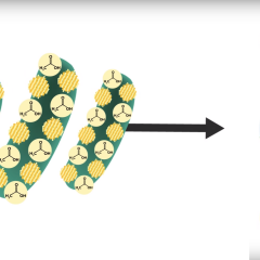 These bacteria covered with small solar panels will disrupt the production of clean energy
