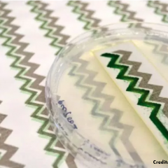 A living and breathable wallpaper for biodegradable sensors