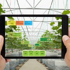 Montréal-based startup Motorleaf enables greenhouse industries to better plan their harvests with artificial intelligence
