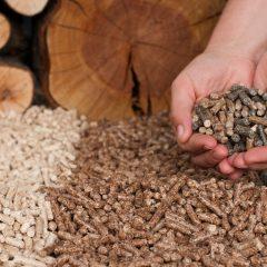 De la biomasse pour remplacer le charbon