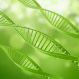 Des chercheurs ont découvert une réaction chimique qui aide à décomposer la biomasse pour produire du biocarburant