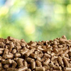 Conversion de biomasse en gaz naturel renouvelable
