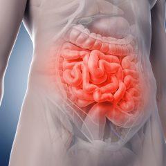 Des chercheurs créent un intestin humain artificiel