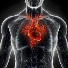 Du tissu cardiaque imprimé en 3D pour se passer des tests sur les animaux