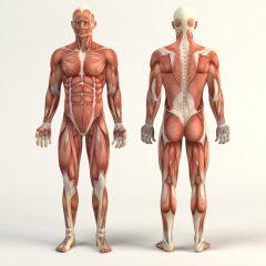 Des chercheurs ont réussi à créer des fibres de nylon capables de se comporter comme les tissus musculaires