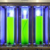 Les bactéries peuvent être conçues pour produire de l'électricité