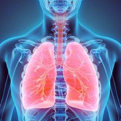 Des scientifiques inventent une méthode pour mieux préserver les organes