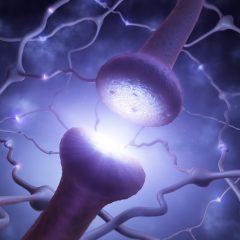 Des synapses électroniques pour un futur cerveau artificiel