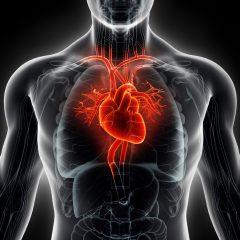 L'EPFL crée un modèle de cœur virtuel servant au diagnostic de pathologies
