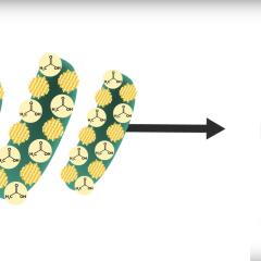 Ces bactéries couvertes de petits panneaux solaires vont bouleverser la production d'énergie propre