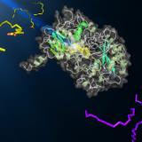 Une photoenzyme permet aux microalgues de produire des hydrocarbures