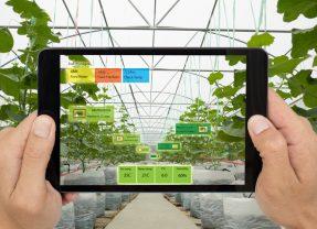 Motorleaf permet aux exploitants de serres de mieux planifier leurs récoltes grâce à l'intelligence artificielle