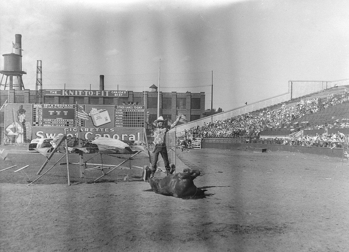 Un cow-boy lève les bras au ciel en signe de victoire à côté d'un cheval couché sur le dos lors d'un rodéo. Nous remarquons la manufacture Grover Mills Ltd. Knit to Fit à l'arrière-plan.