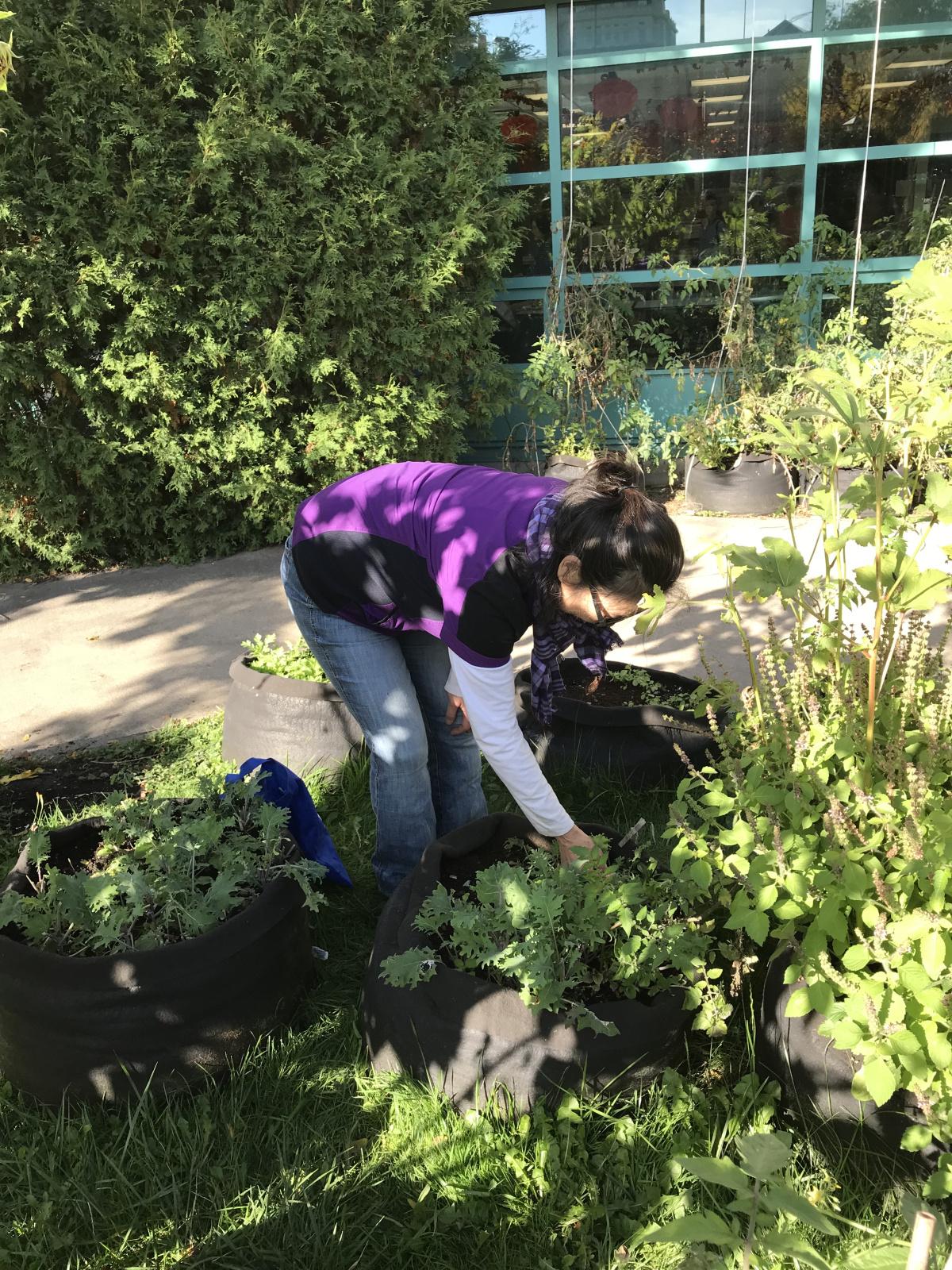 Une dame est penchée sur un grand sac de jardinage contenant des légumes.