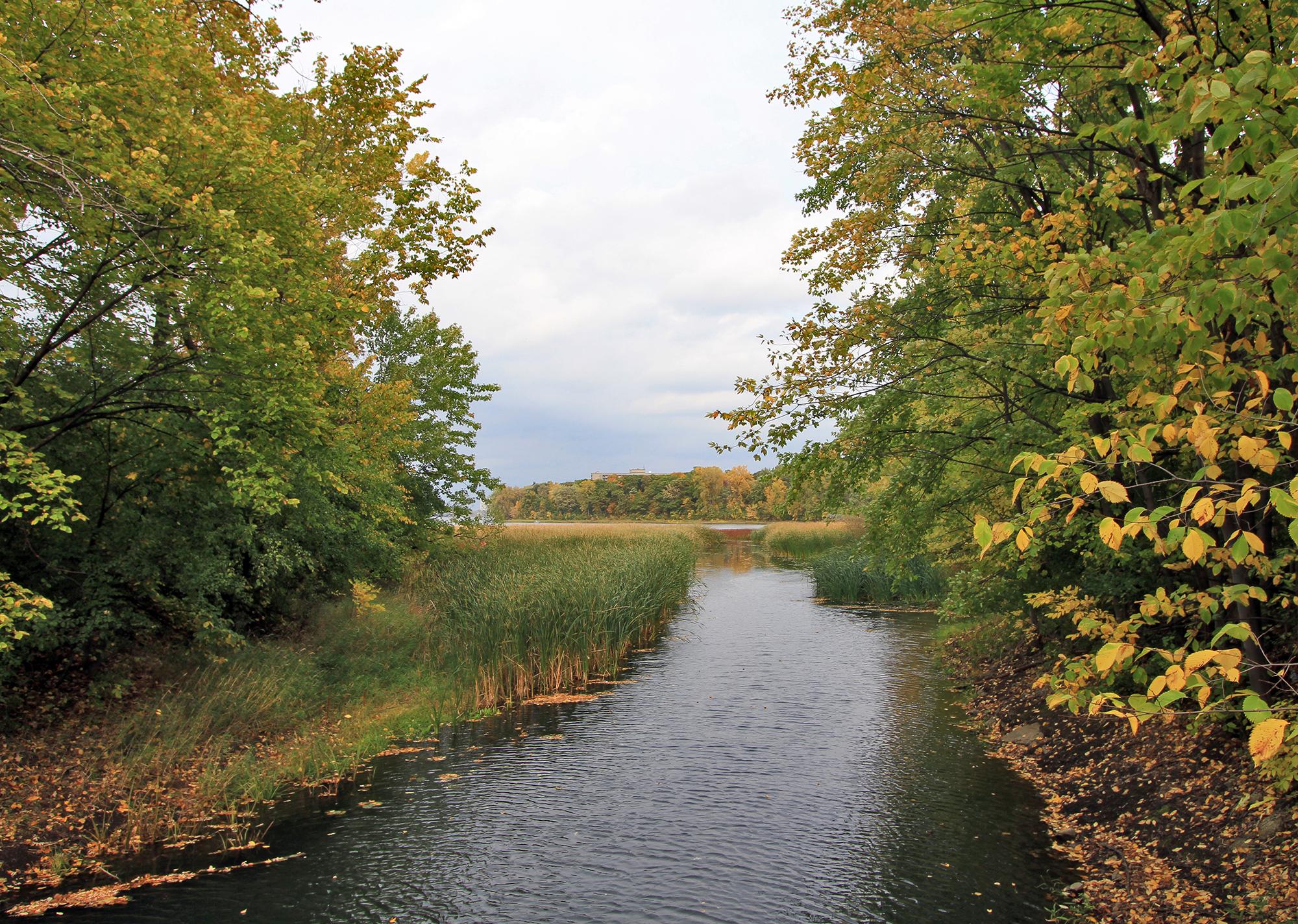 Ruisseau bordé d'arbres et de plantes de marais se jetant dans une rivière.