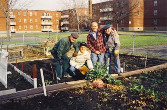 Quatre hommes âgés posent devant un très gros navet, près de parcelles dégarnies, entourées d'immeubles d'habitation.