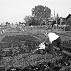 Un homme arrose son jardinet et, à l'arrière-plan, quelques autres citoyens entretiennent leur jardin, à proximité de bâtiments urbains.