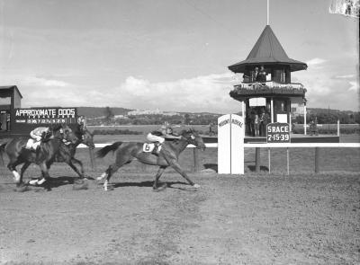 Photo noir et blanc montrant des jockeys conduisant leurs chevaux à vive allure lors d'une course sur la piste de l'hippodrome Mont-Royal. À l'arrière-plan une tourelle à deux étages avec des observateurs jumelles en main et un tableau d'affichage.