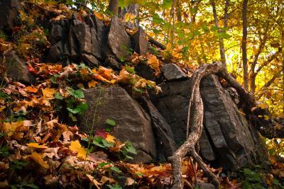 Gros plan sur le mont Royal, avec des rochers et des feuilles à l'avant-plan