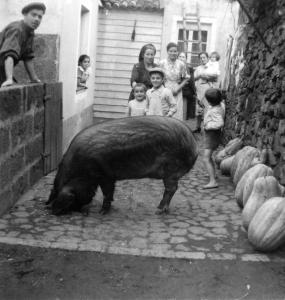 Photo noir et blanc montrant une cour avec un porc au premier plan, un homme derrière un muret à gauche et des femmes et des enfants en arrière plan.