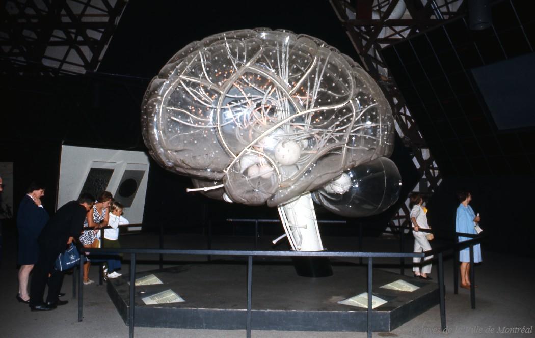 Le cerveau, dans le pavillon de « L'Homme et la Vie »