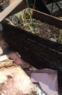 Plus de 125 incendies ont été déclenchés par des mégots écrasés dans les pots de fleurs à Montréal