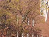 Élévation latérale droite de la bibliothèque de droit Nahum-Gelber, donnant sur la rue University. Photographie.