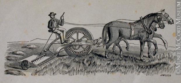 Un fermier manœuvre dans un champ de la machinerie agricole tirée par deux chevaux.