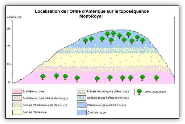Localisation de l'Orme d'Amérique sur la toposéquence du Mont-Royal.