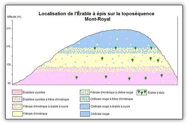 Localisation de l'Érable à épis sur la toposéquence du Mont-Royal.