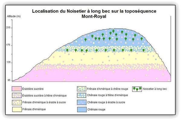 Localisation du Noisetier à long bec sur la toposéquence du Mont-Royal.