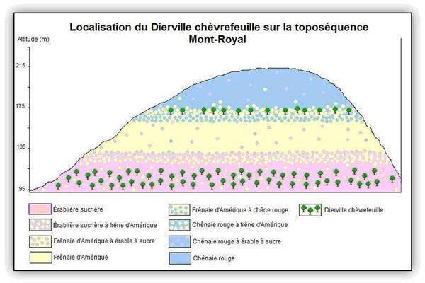 Localisation du Dierville chèvrefeuille sur la toposéquence du Mont-Royal.