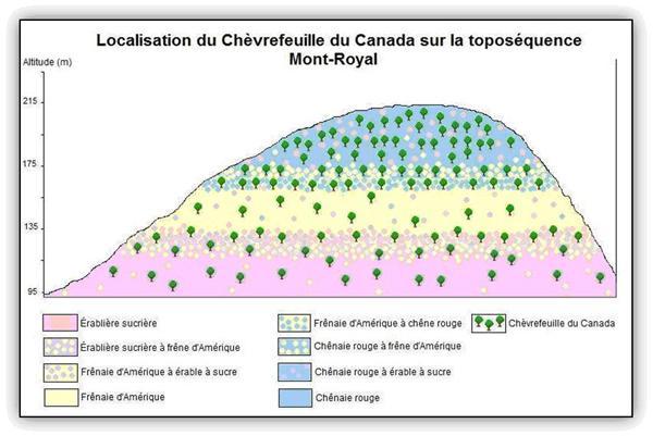 Localisation du chèvrefeuille du Canada sur la toposéquence du Mont-Royal.