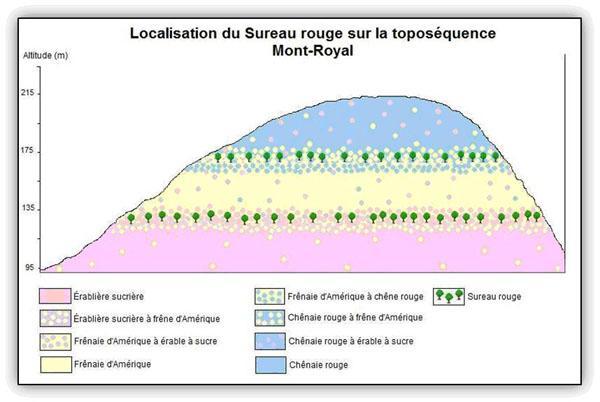 Localisation du Sureau rouge sur la toposéquence du Mont-Royal.
