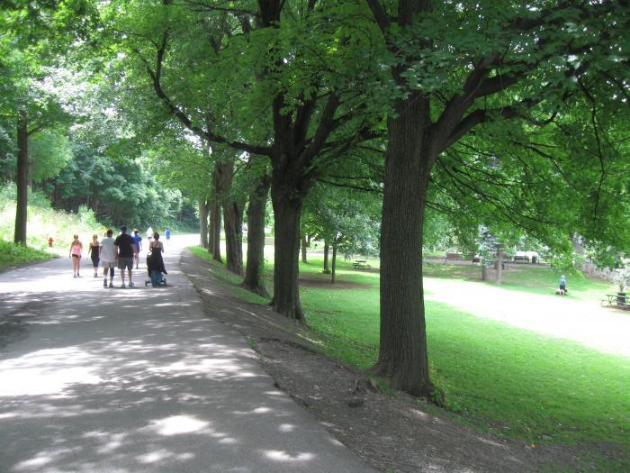 Vue de l'alignement. Parc du Mont-Royal.